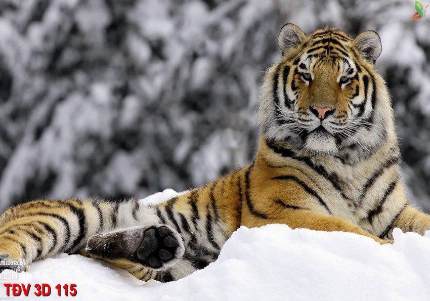 TÐV 3D 115 - Tranh động vật 3D TÐV 3D 115