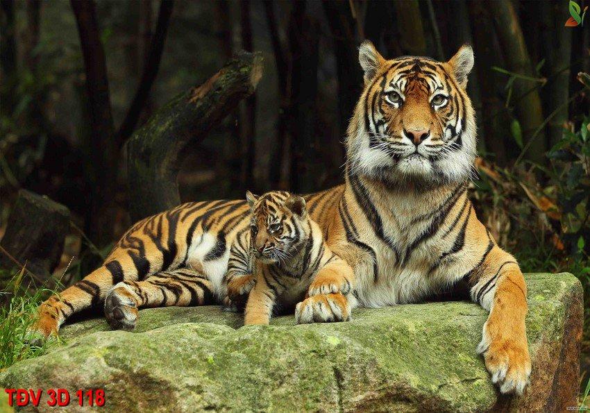 TÐV 3D 118 - Tranh động vật 3D TÐV 3D 118