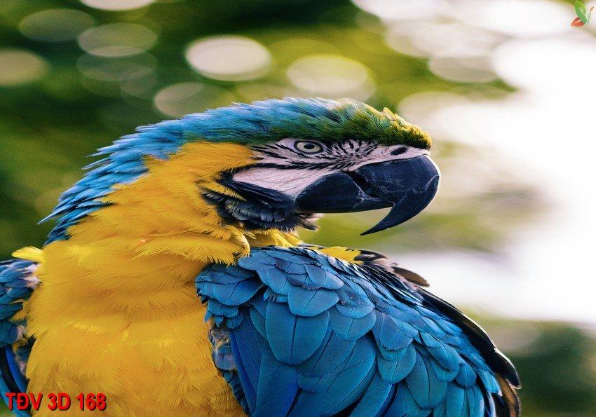 TÐV 3D 168 - Tranh động vật 3D TÐV 3D 168