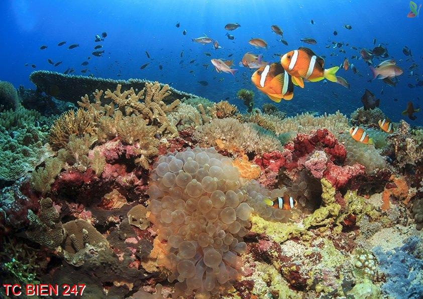 TC Bien 247 - Tranh cảnh biển TC Bien 247