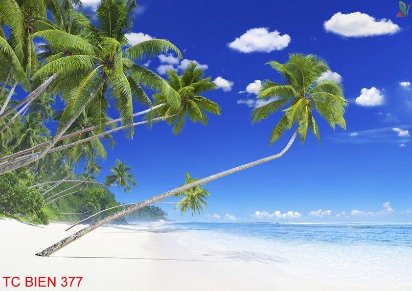 TC Bien 377 - Tranh cảnh biển TC Bien 377