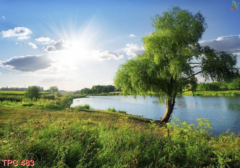 Tranh phong cảnh 483