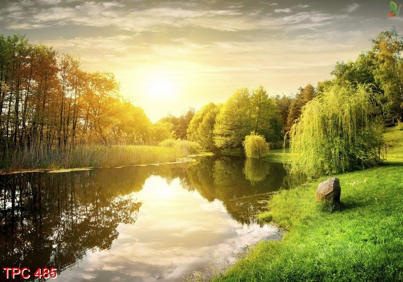 Tranh phong cảnh 485