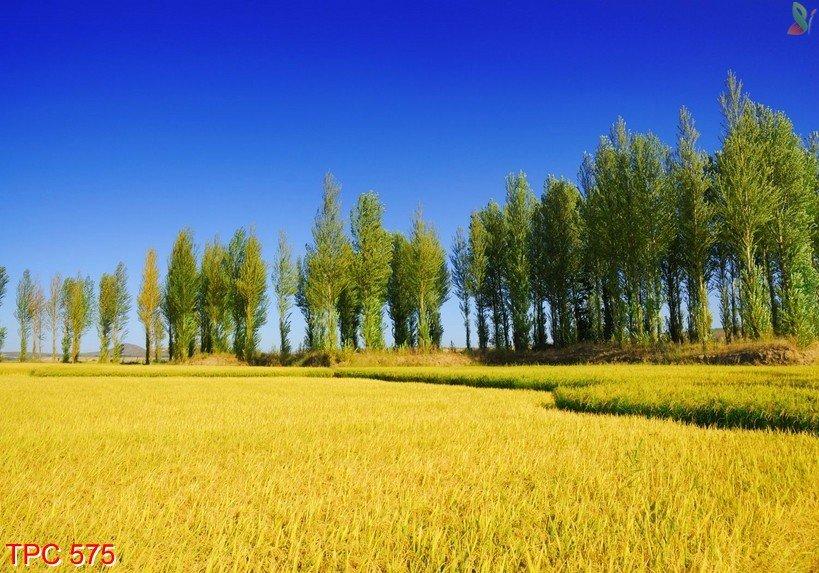 Tranh phong cảnh 575