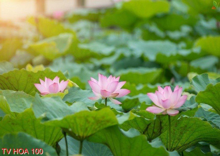 Tranh về hoa 100