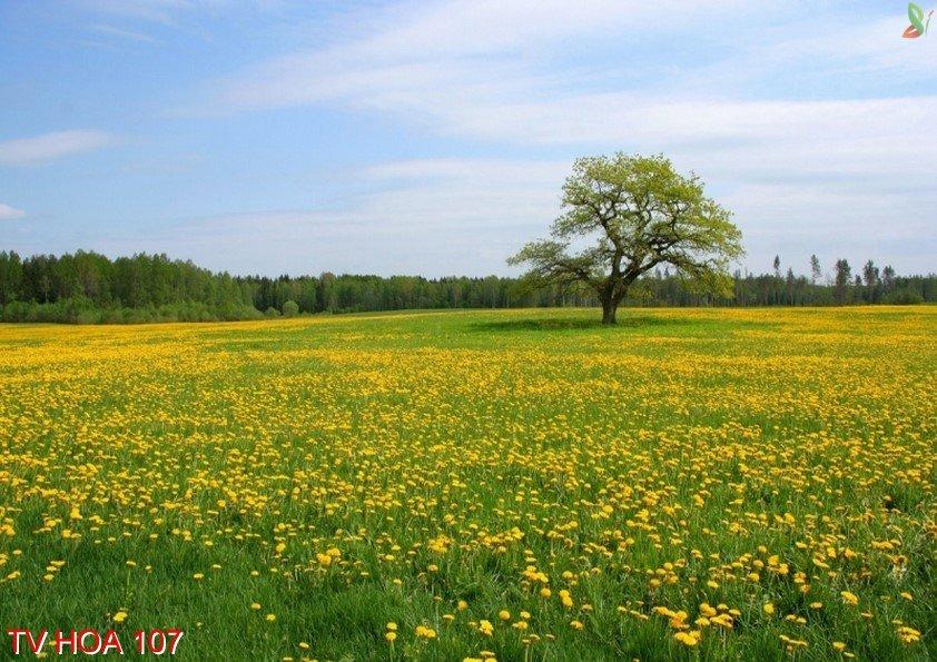 Tranh về hoa 107