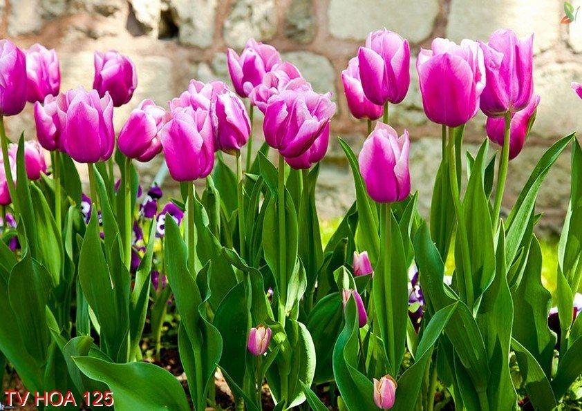 Tranh về hoa 125