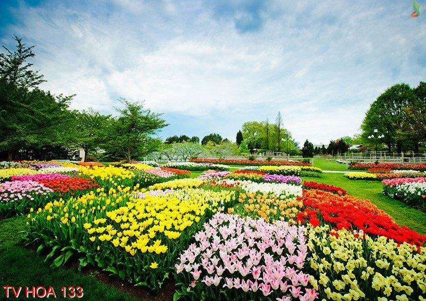 Tranh về hoa 133