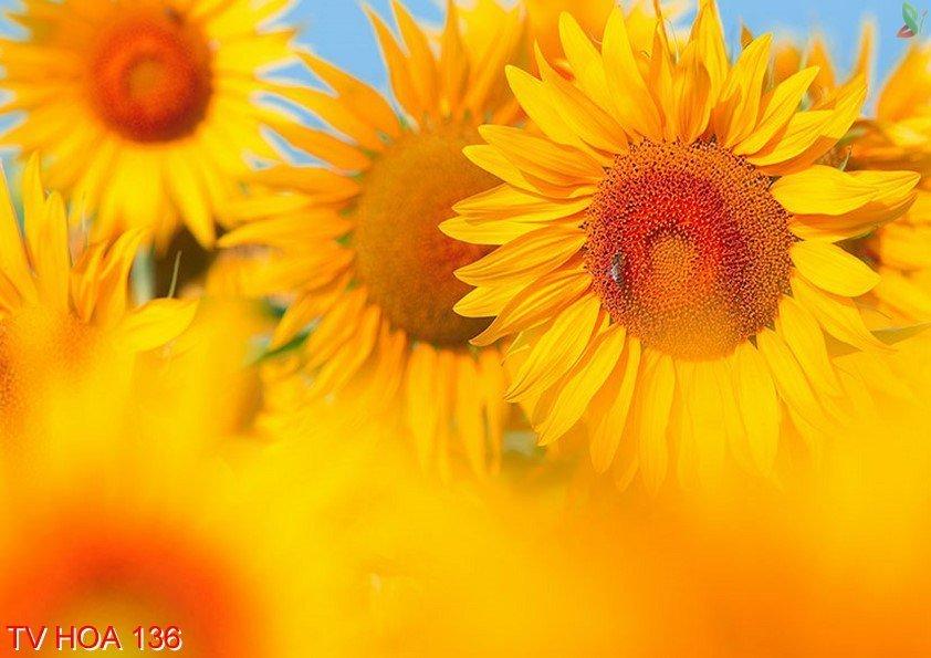 Tranh về hoa 136