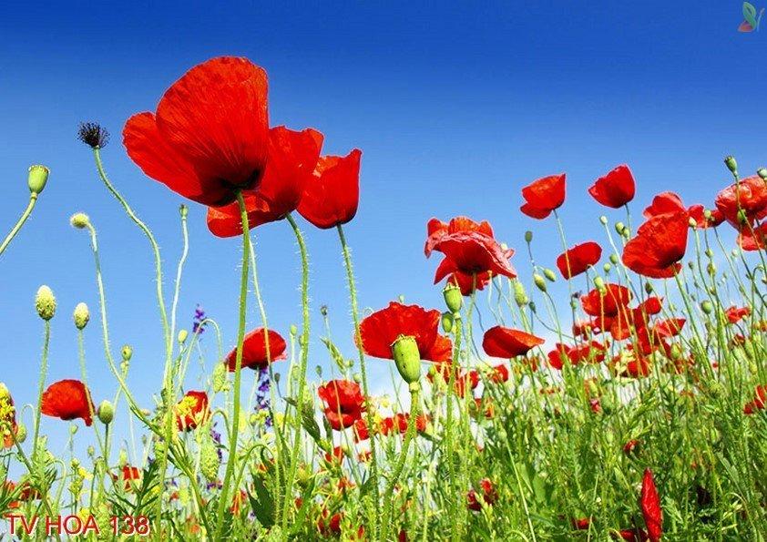 Tranh về hoa 138