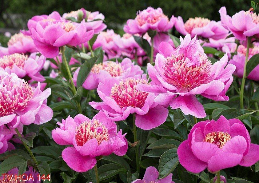Tranh về hoa 144