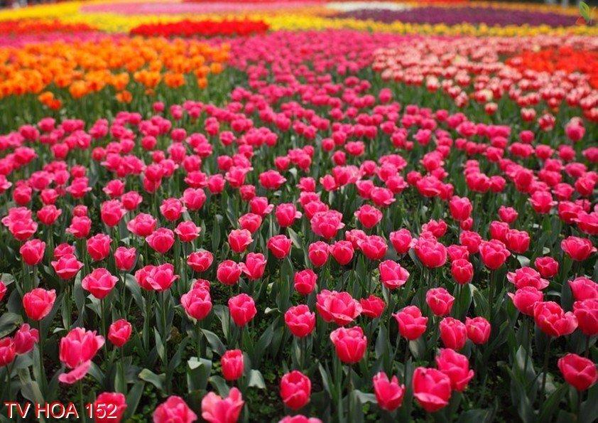 Tranh về hoa 152