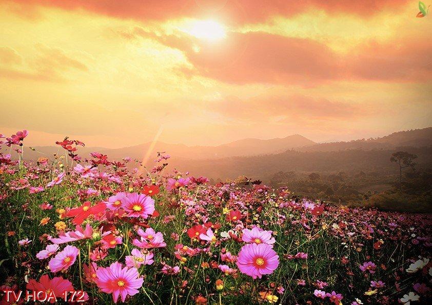 Tranh về hoa 172