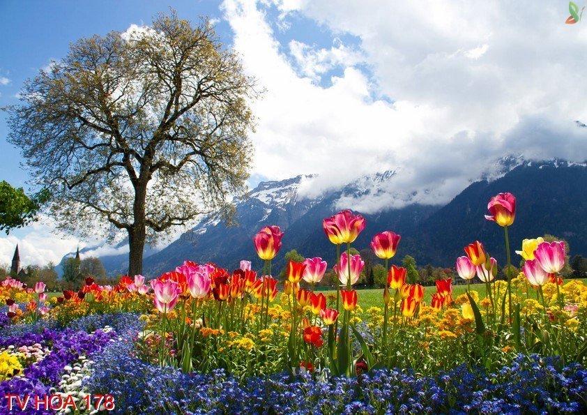 Tranh về hoa 178