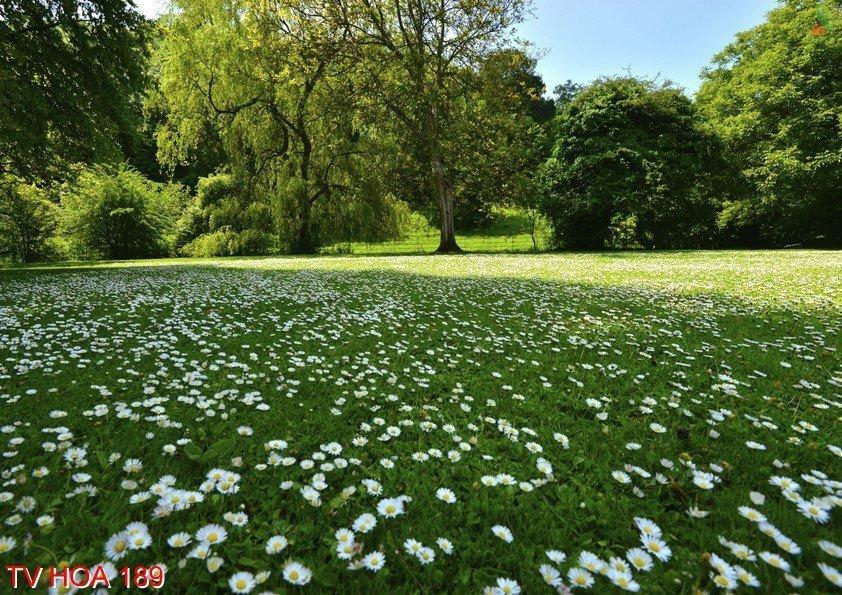 Tranh về hoa 189