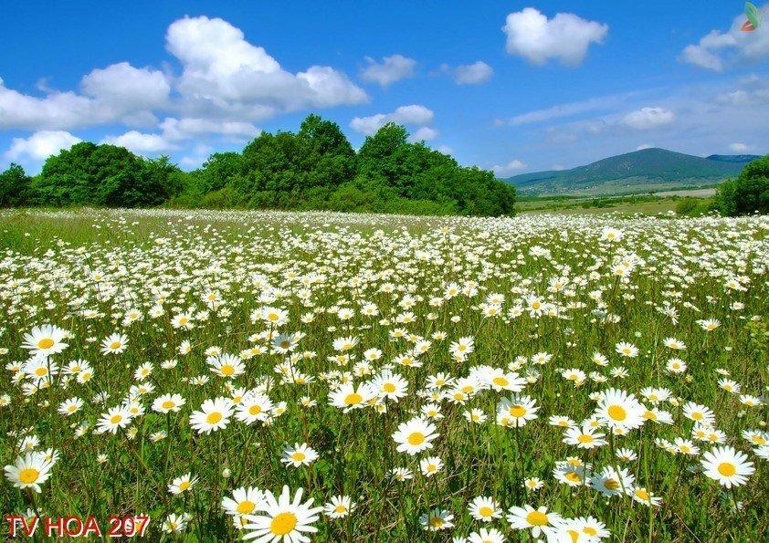 Tranh về hoa 207