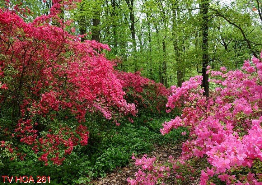 Tranh về hoa 261