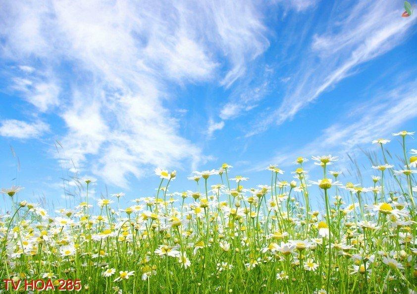 Tranh về hoa 285