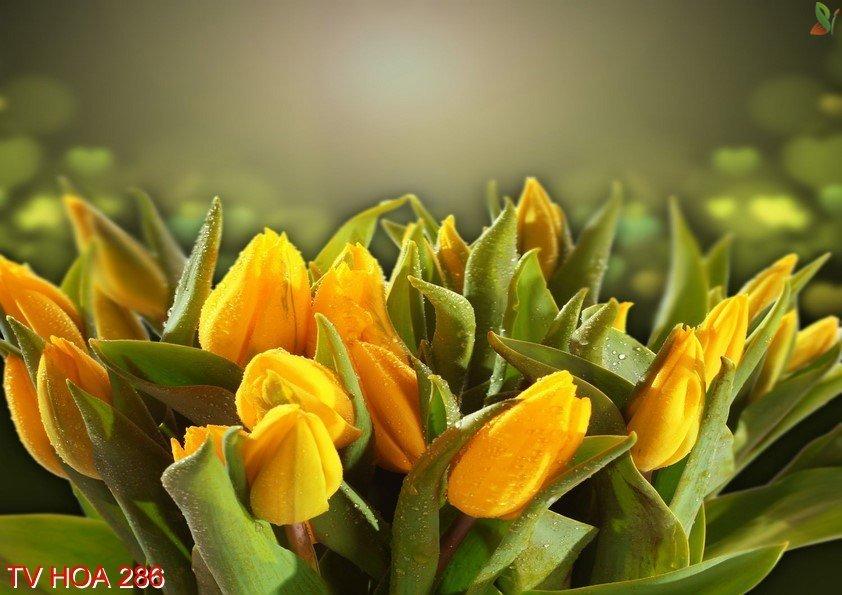 Tranh về hoa 286