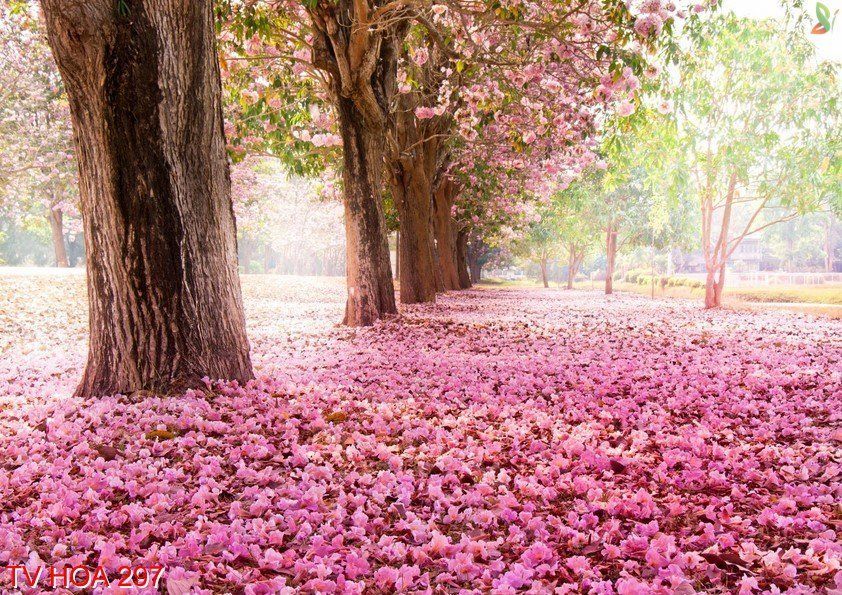 Tranh về hoa 297