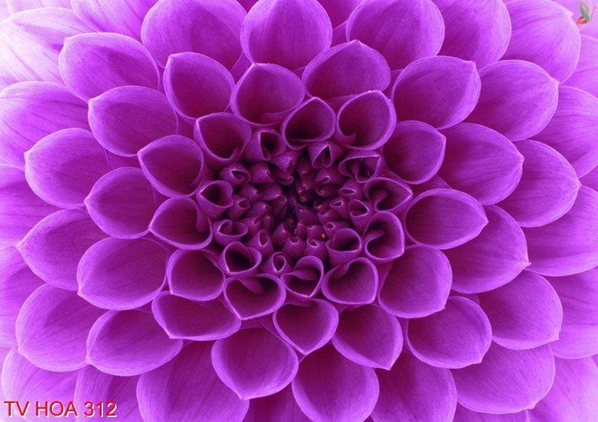 Tranh về hoa 312