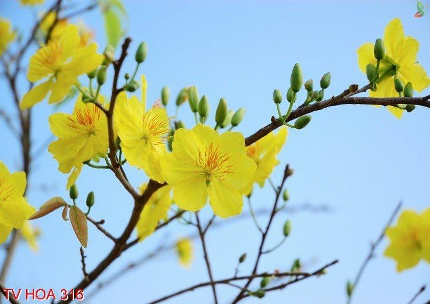 Tranh về hoa 316
