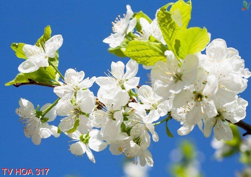 Tranh về hoa 317