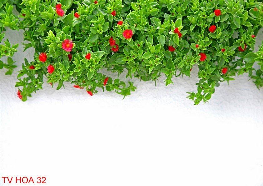 Tranh về hoa 32