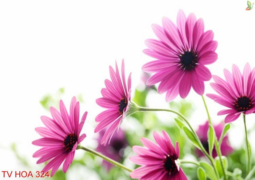 Tranh về hoa 324