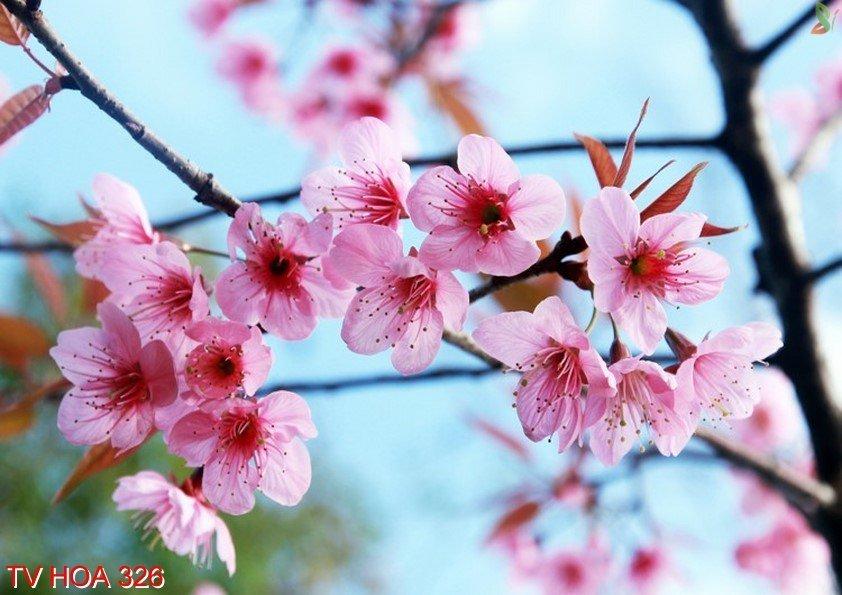 Tranh về hoa 326