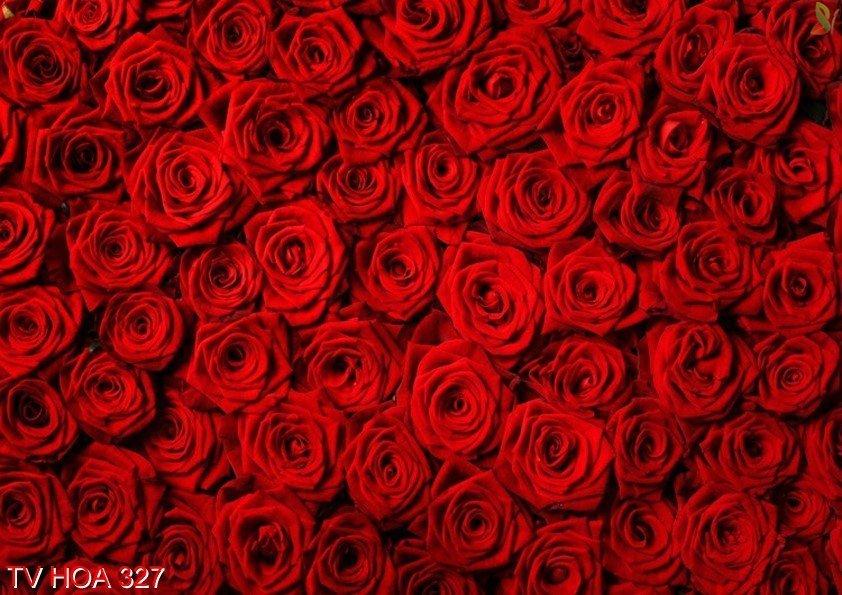 Tranh về hoa 327