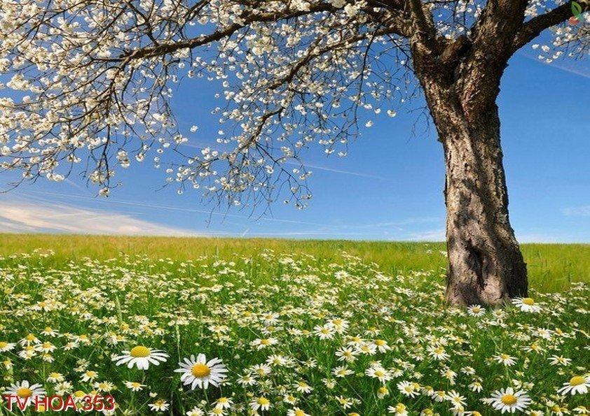 Tranh về hoa 353