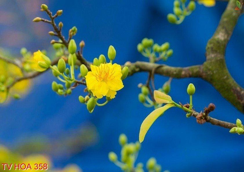 Tranh về hoa 358