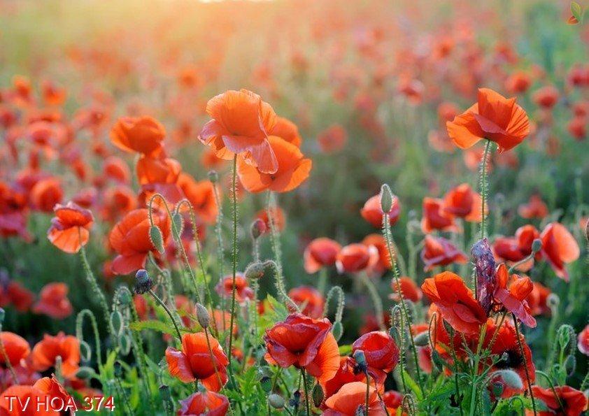 Tranh về hoa 374