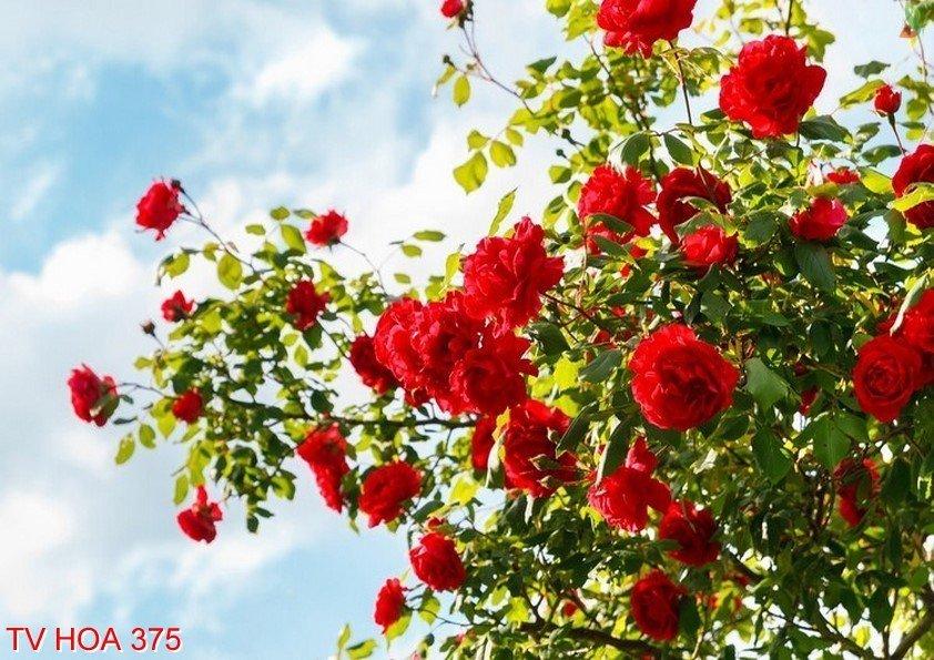 Tranh về hoa 375