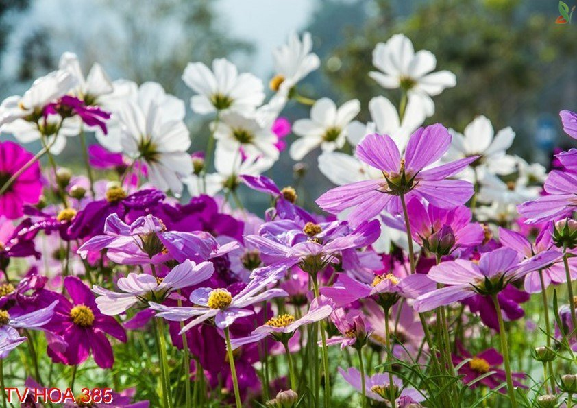 Tranh về hoa 385