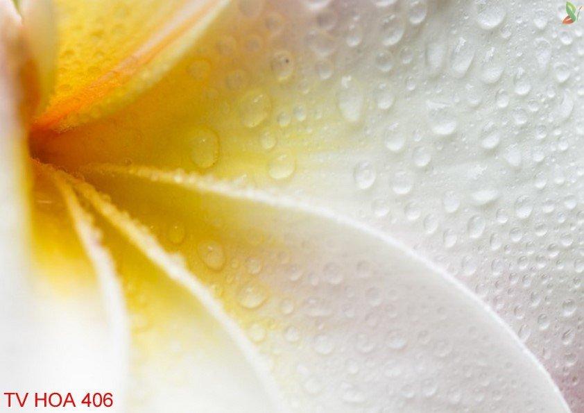 Tranh về hoa 406