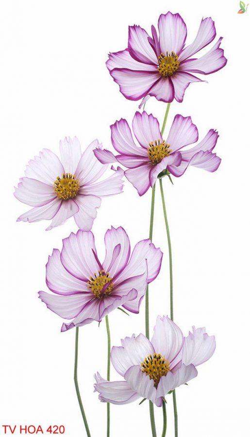 Tranh về hoa 420