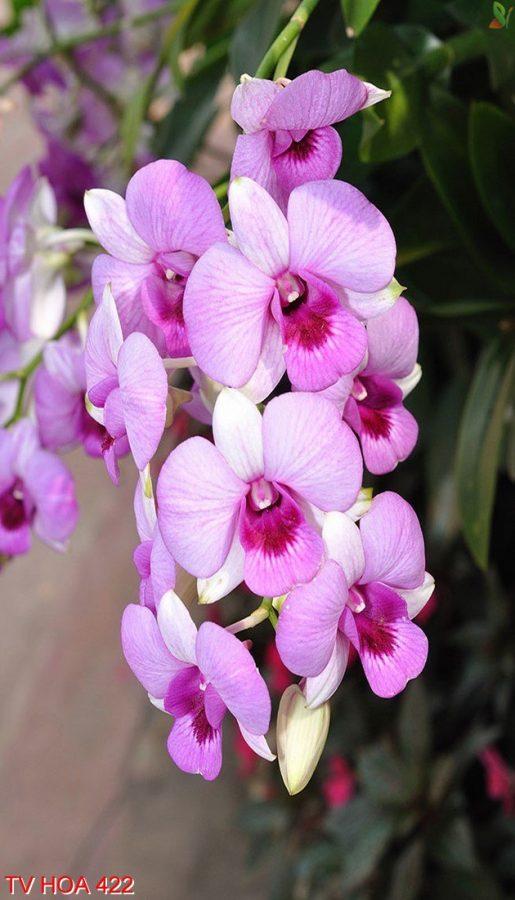 Tranh về hoa 422