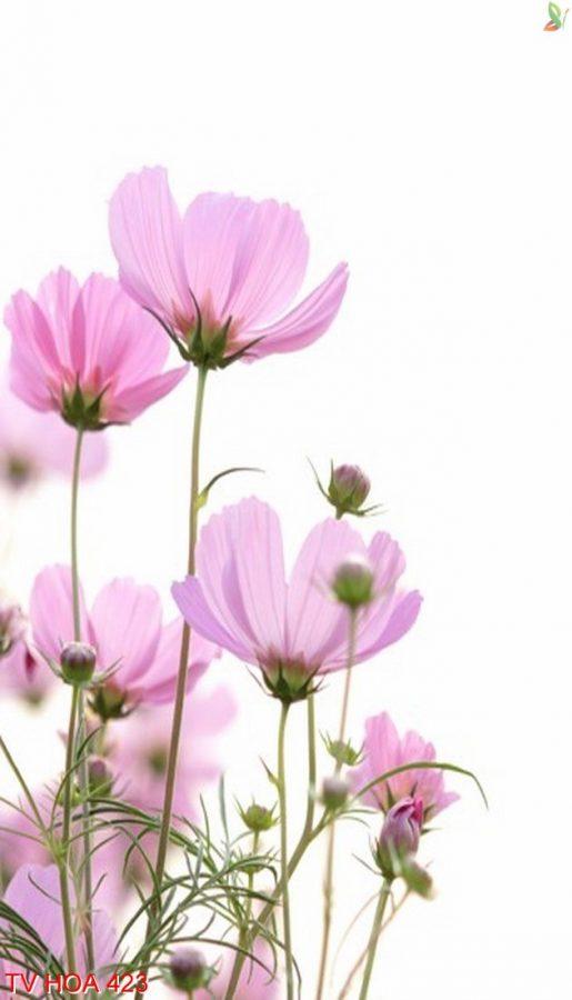 Tranh về hoa 423