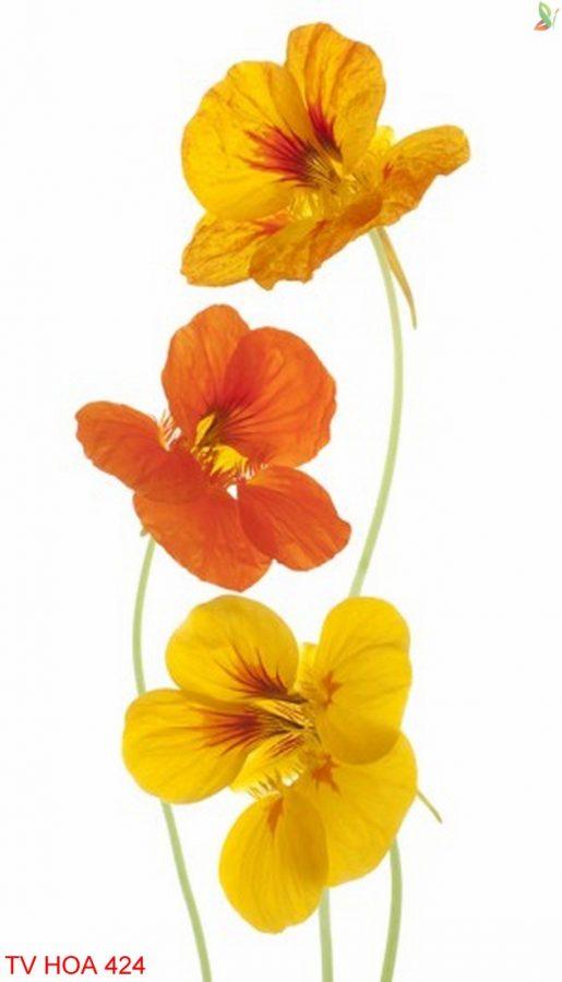 Tranh về hoa 424