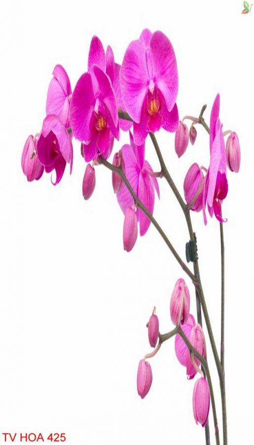 Tranh về hoa 425