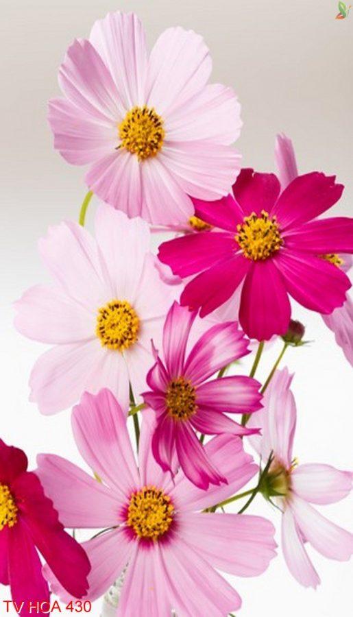 Tranh về hoa 430