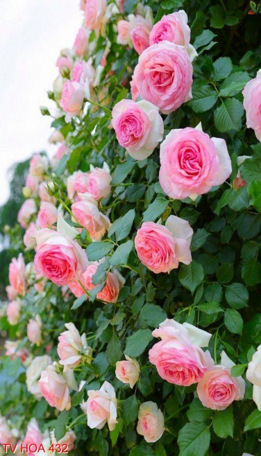 Tranh về hoa 432