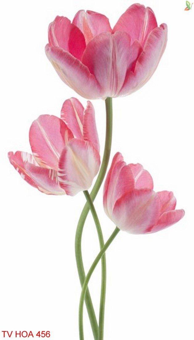Tranh về hoa 456