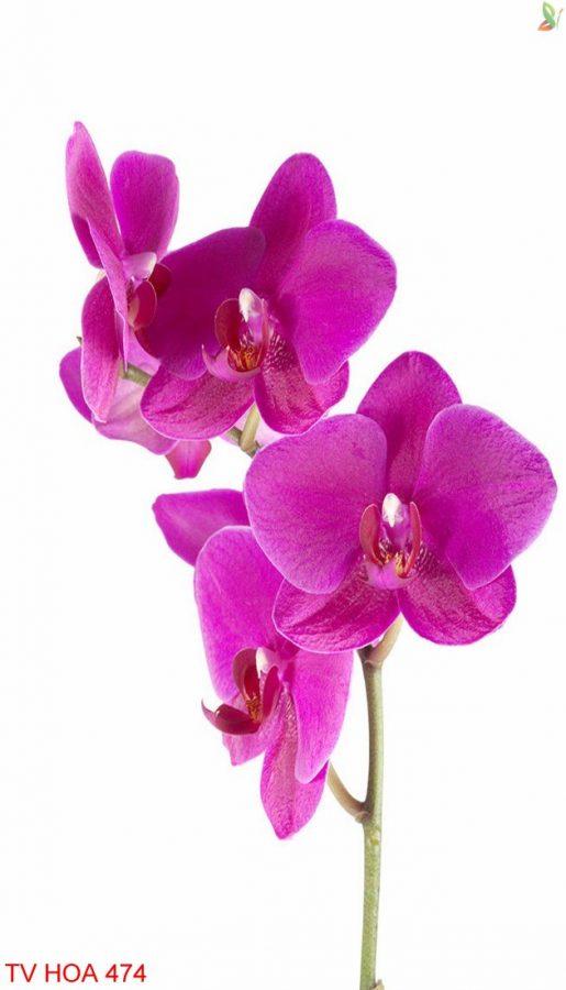 Tranh về hoa 474