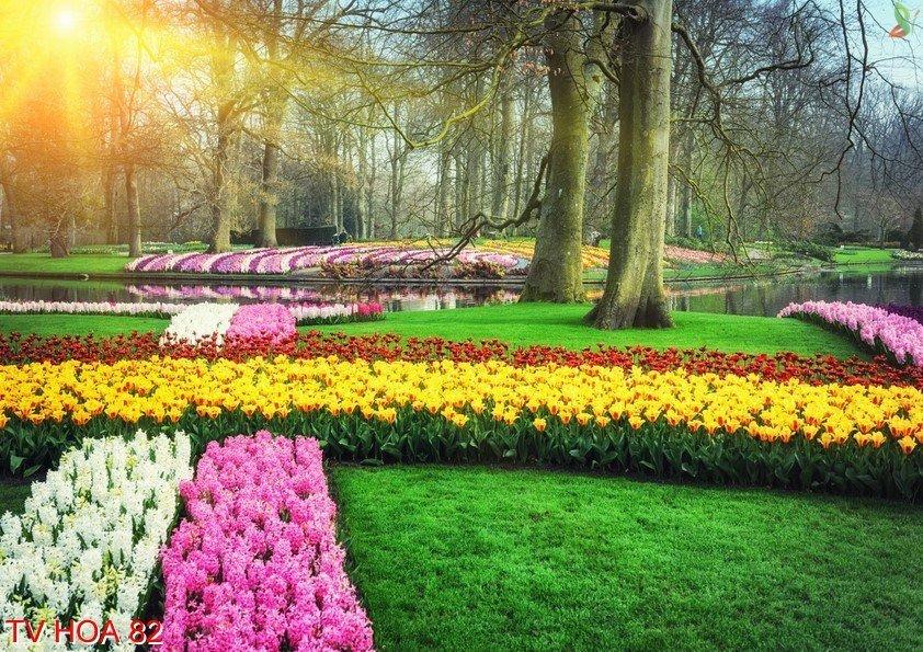 Tranh về hoa 82