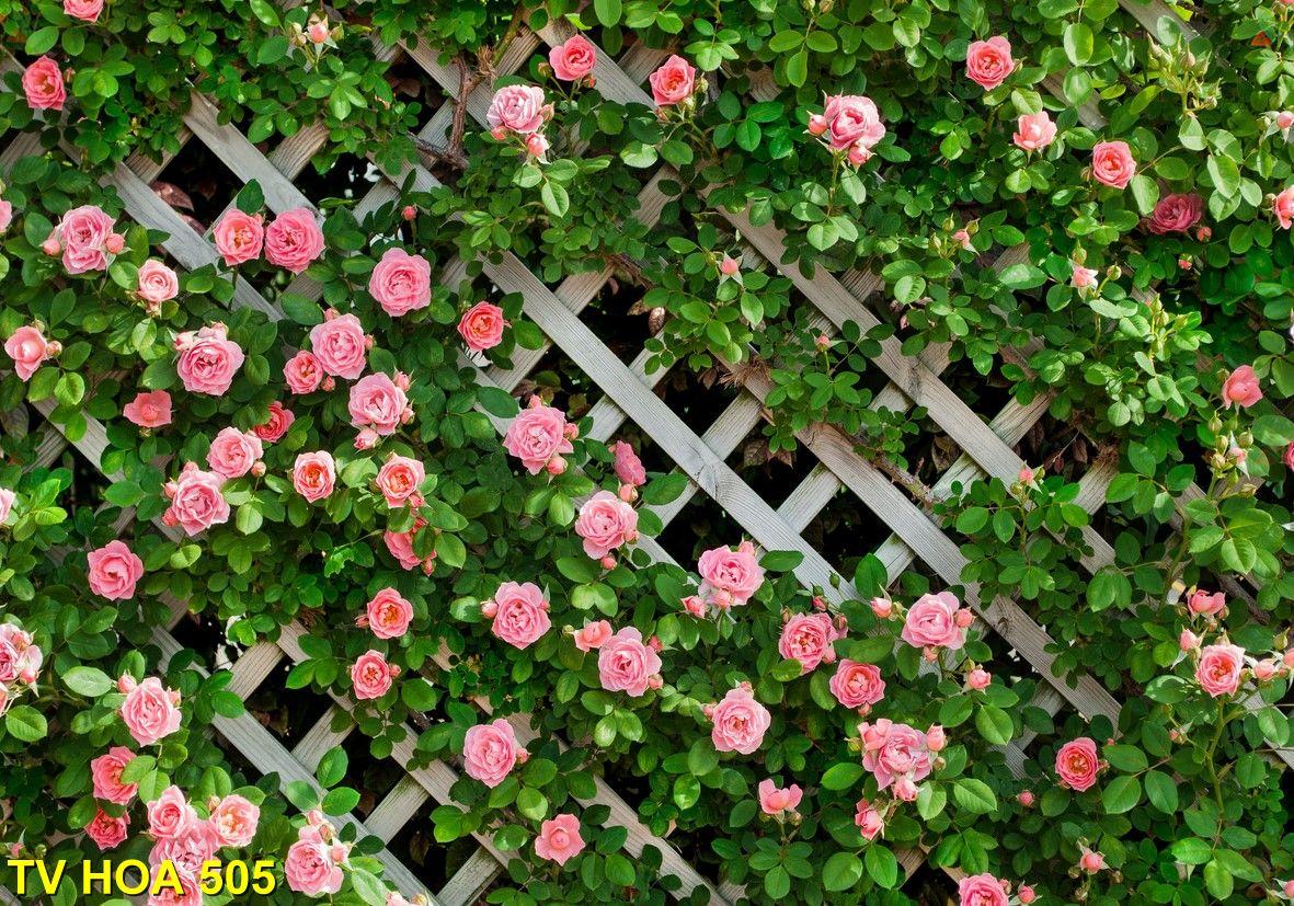 Tranh về hoa TV Hoa 505