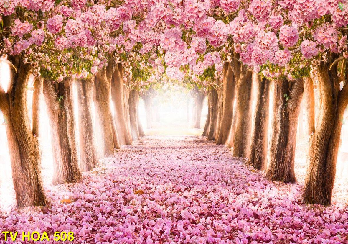Tranh về hoa TV Hoa 508