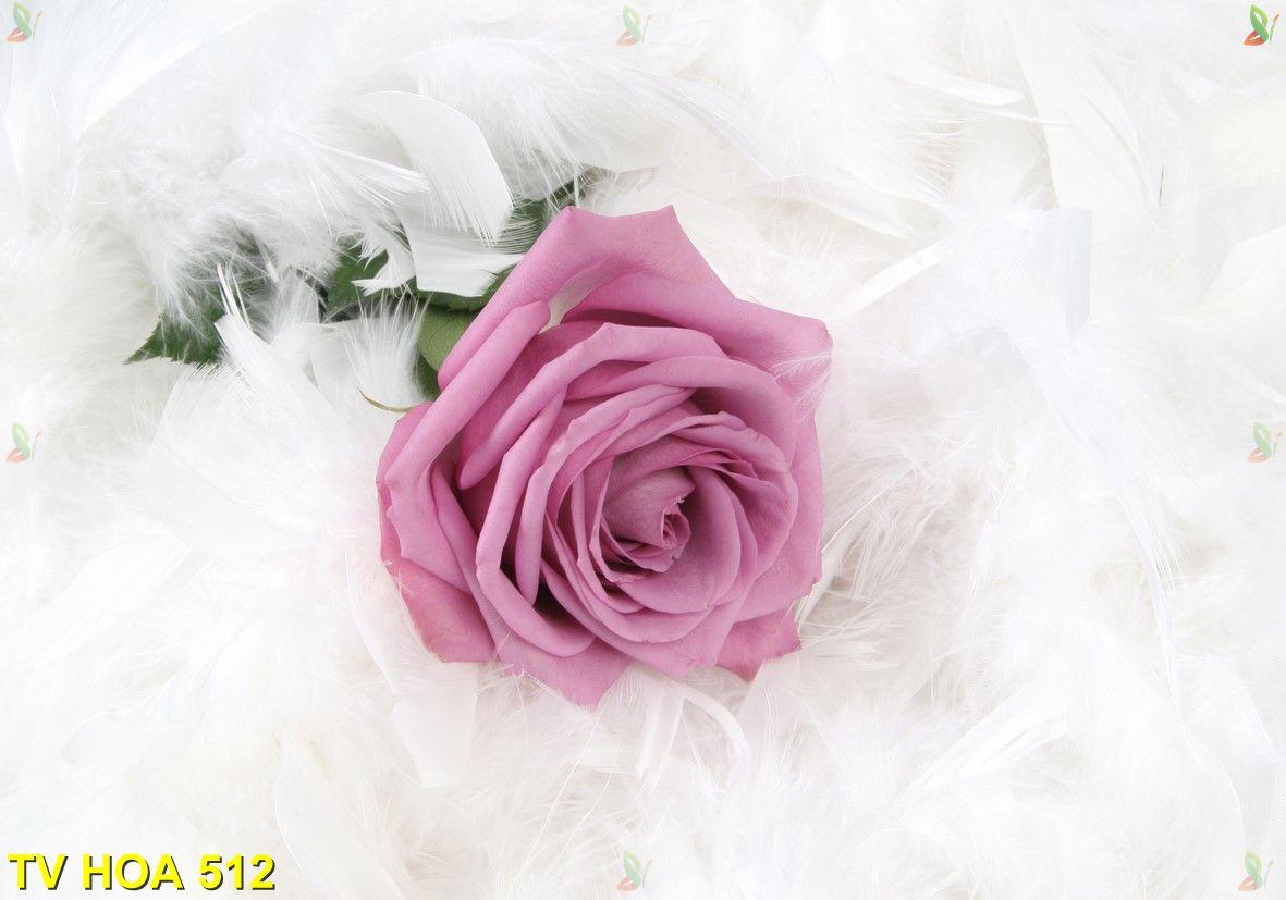Tranh về hoa TV Hoa 512